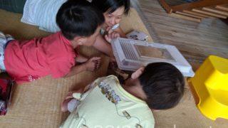 カブトムシを観察する子どもたち+奥さん