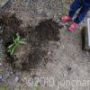 飼育していたカブトムシとクワガタが死んだので、庭に埋葬してやった