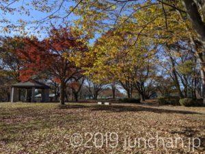 紅葉の進んだ公園