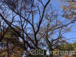 葉っぱが散った木