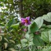 デストロイヤーの花が咲いた