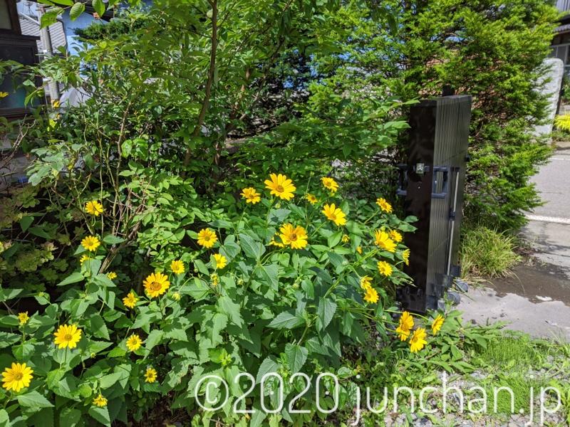 黄色い花が鮮やかに咲いていた