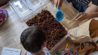 大きい虫かごにカブトムシの環境を作る