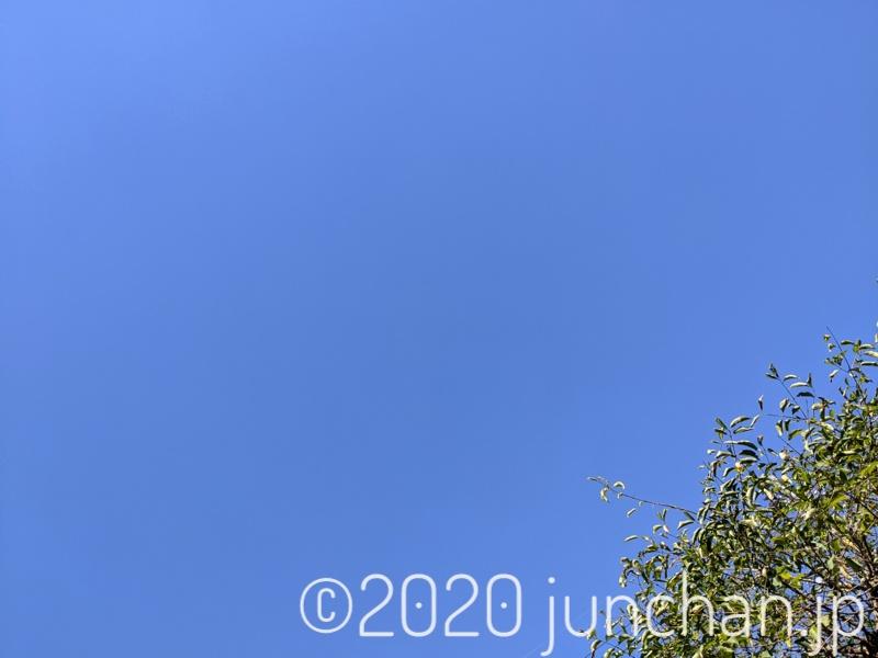 庭で転がって見上げた空