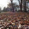 地面は枯れ葉で敷き詰められていた