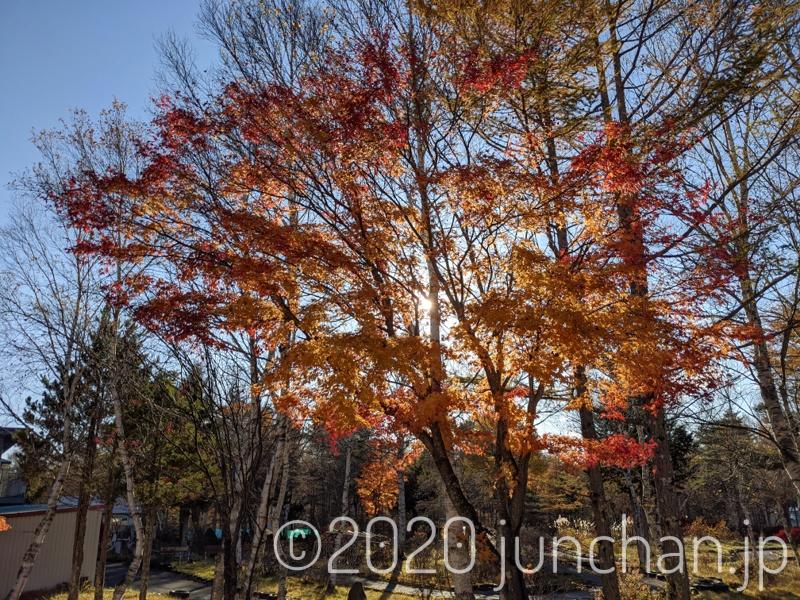 女神湖周辺は紅葉が進んでいた