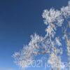 揺れる樹氷が美しい